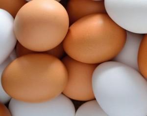 workshop-wisdomtrees-eggs-at-the-oracle